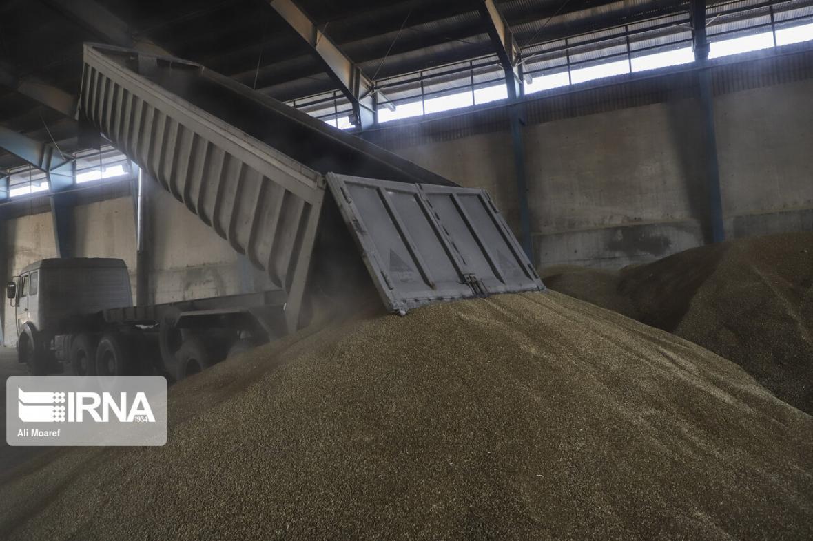 خبرنگاران نخستین محموله کلزا و گندم خوزستان به سیلو منتقل شد