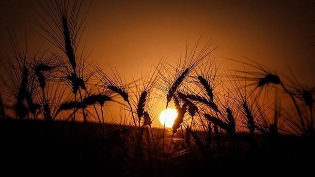اثرات اقتصادی کرونا بر کسب وکارهای بخش کشاورزی